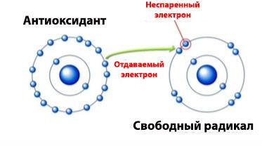 антиоксидант и св.радикал