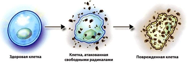 esli-sperma-prevratilas-v-vodu